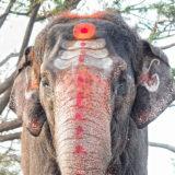 Lakshmi the Temple Elephant in Hampi