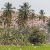 Paddy field near Hampi