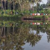 Palm Trees Reflection On Backwater Kerala