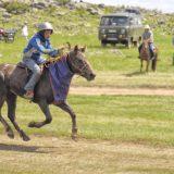 Naadam horse racing
